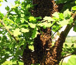 Bienen im Baum