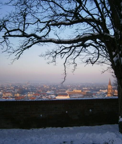 Eine knorrige alte Robinie vor einer Mauerbrüstung. Es liegt Schnee. Daninter im Winternebel, die Stadt Landshut in Niederbayern. Darüber strahlend blauer Himmel.