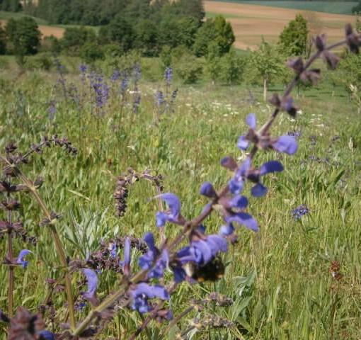 IMKER HONIG Imker Kulturlandschaft mit reichlich Blüten für Hummeln, Schmetterlinge und Bienen.