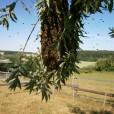 HONIG BESTELLEN; Bienenschwarm, Naturschwarm
