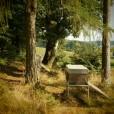 Imkermeister Oswald´s Bienenstand