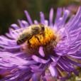 Honig & Natur Blog