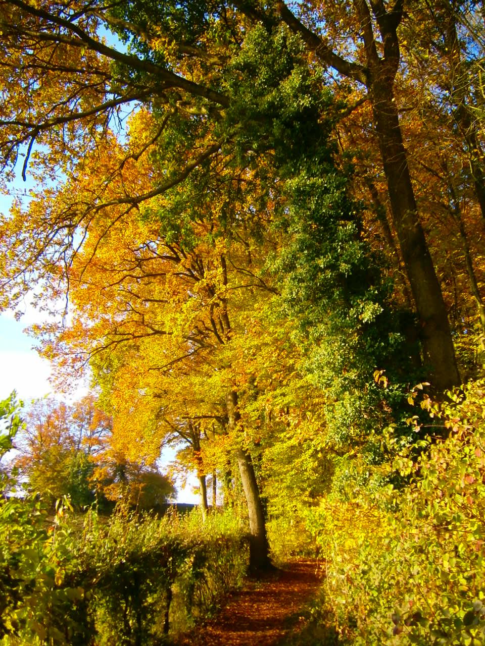 Hortus insectorum Waldweg und Bienenhecke bio honig