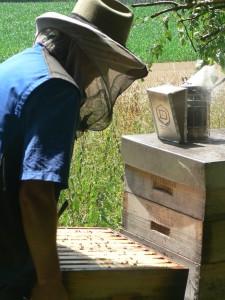 Bio-Imker Hans Georg Oswald bei den Bienen.