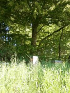 propolis vom imker kaufen; Bienenvolk von Imkerei Oswald am Waldrand.