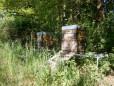 Natur-Bienenhonig