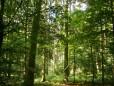Sommerwaldhonig