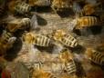 Ökologische Bienenhaltung auf Oswalds Ökohof