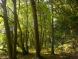 Lindenbäume im Bienenwald, von früherer Imkergeneration gepflanzt.