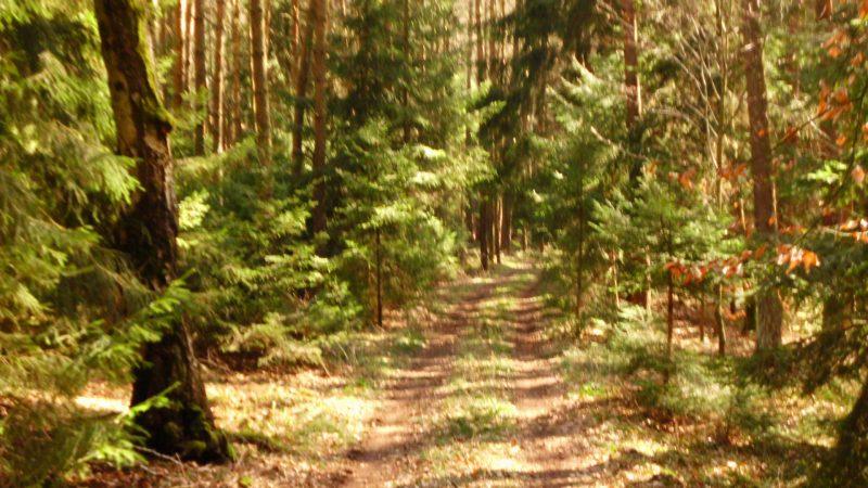 Sonniger Waldweg in der Hallertau in Bayern.