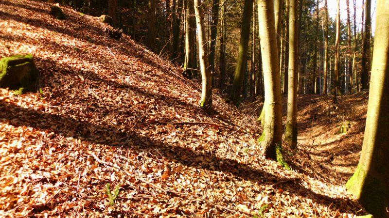 Kelten Denkmal im Wald.