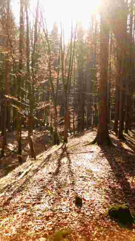 Keltischer Wall im Wald.