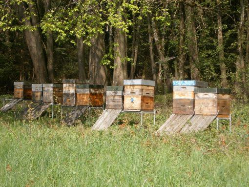 Honig kaufen: Bienenvölker in ökologischer Freiaufstellung
