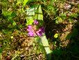 Seltene Orchideen