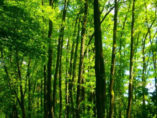 Sommerwald am Quellgrund.