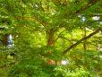 Natur Biohonig