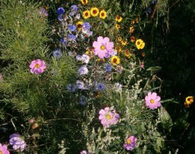 BLUETENPOLLEN KAUFEN; Blumen am Bienenhof im Isar-Hügelland www.bio-honig.com.