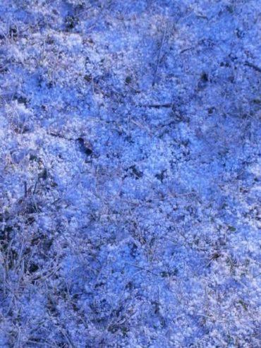 HONIG POLLEN KAUFEN; Die ersten Schneeflocken auf der Bienenkräuterweide.