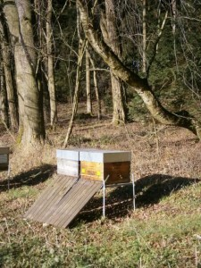 Flugbetrieb am 24. Dezember. Die dünnwandigen Beuten lassen die Bienen näher am Wettergeschehen sein. Dadurch können die Bienen schneller auf schönes Wetter reagieren. Foto: bio-honig.com