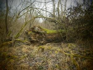 Bizarre Wildnis, die manchmal einen Urwaldcharakter hat, und sonst nur in Nationalparks zu finden ist.