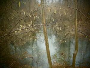 Isar-Altwasserarm mit blühendenHaselnusskätzchen im Vordergrund