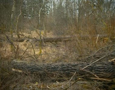Honig und Pollen kaufen aus den Isarauen. Viele umgestürzte Bäume und Totholz in den Isarauen.