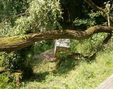 KALTGESCHLEUDERTEN HONIG KAUFEN Windwurf Schaden am Bienenstand.