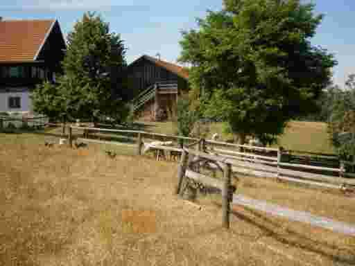 HONIG VERSAND; Die Imker Hofstelle im Sommer. Es sind auch Hühner und Schafe zu sehen.