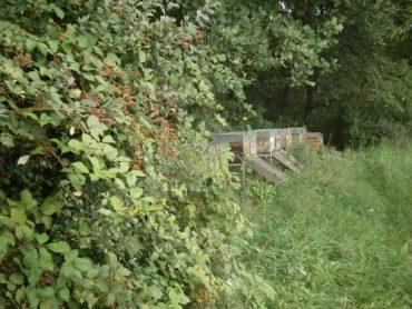 Imker Honig; Waldbienen von Imker Oswald in der Holledau.