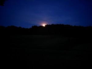"""Bis das letzte Bienenvolk versorgt war, ist bereits der Mond aufgegangen. Imker wissen, wovon ich spreche. Im Spätsommer scheint einem die Zeit davonzulaufen """"like wild horses running over a hill"""""""