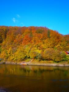 Buchen-/Eichenmischwald an den Donauhängen