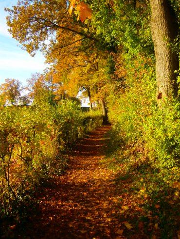 Alter historischer Höhenweg an der Donau im Naturschutzgebiet beim Kloster Weltenburg.