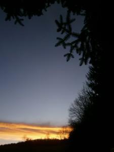 Die Fichtenzweige der Trauffichten zaubern ein Muster in den Abendhimmel, dahinter Schlehenhecken