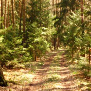 Waldweg zur berühmten Keltenschanze zwischen Oberlauterbach (Landkreis Landshut) und Wildenberg (Landkreis Kehlheim).