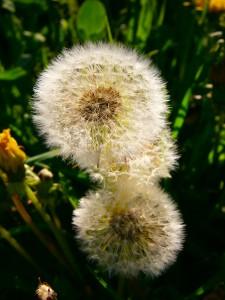 Diese Pflanze ist eine echte Verwandlungskünstlerin