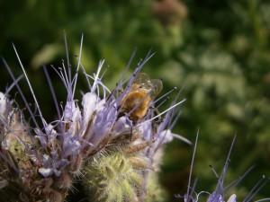 Jede Biene und jede Blüte ist ein immer ein Unikat.