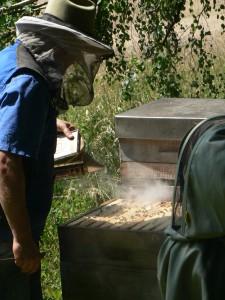 Am Waldbienenstand, etwas Rauch aus Kiefernnadeln besänftigt die fleißigen Bienen