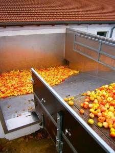 Hier am Biohof Wimmer im Rottal werden die Äpfel abgeladen und gelangen auf einer schrägen Ebene in eine Waschanlage. Die Äpfel werden anschließend perfekt gewaschen und danach zerkleinert.