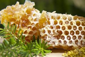Bienenhonig vom Imker