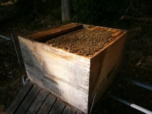 Harmonisches Bienenvolk aus ökologischer Waldbienenhaltung von Imkerei Oswald bio-honig.com