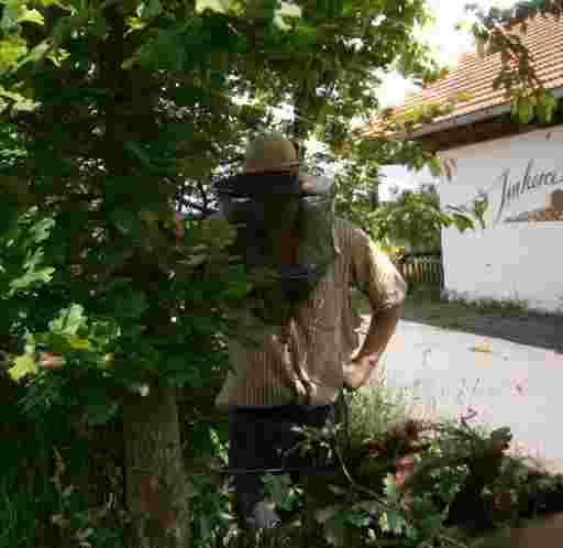 Der Imker Oswald mit Bienenhut und Bienenschleier beim Schwarmfang