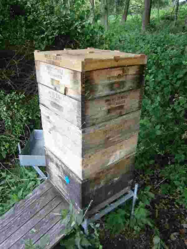 Ein Foto von einem selbstgebauten Bienenkasten, der von einem Bienenvolk bewohnt ist.