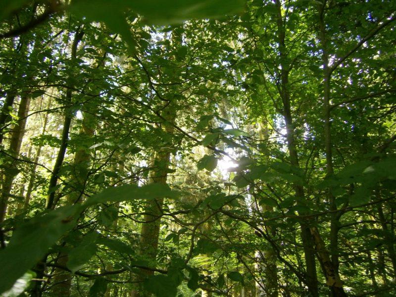 Laubmischwald im voralpinen Isar-Hügelland. Waldbinenenstand von bio-honig.com H.G.u.R.Oswald GbR. Deutschland, Juni 2016.
