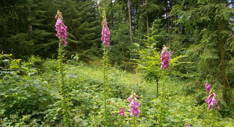 Wunderschöne Waldblumen auf einer Lichtung.