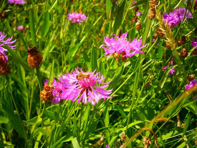 Echter Honig stammt von echten Bienen auf echten Blüten und nicht von der Honigindustrie (erkennbar am Label: Mischung aus EU- und Nicht-EU).