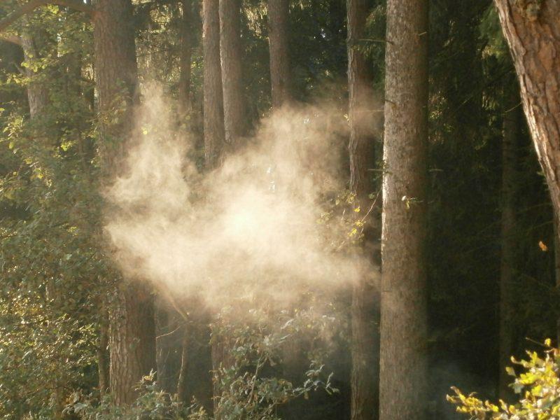 Rauch bei den Bienen am Waldbienenstand.