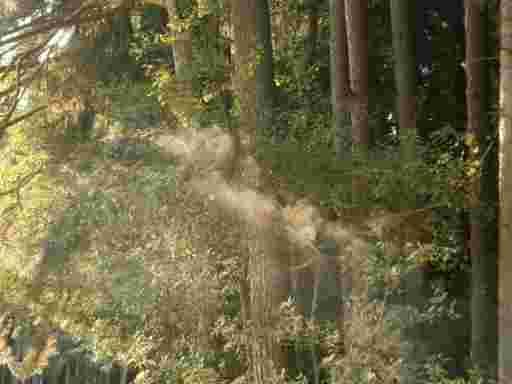 Im Walde bei den Bienen.