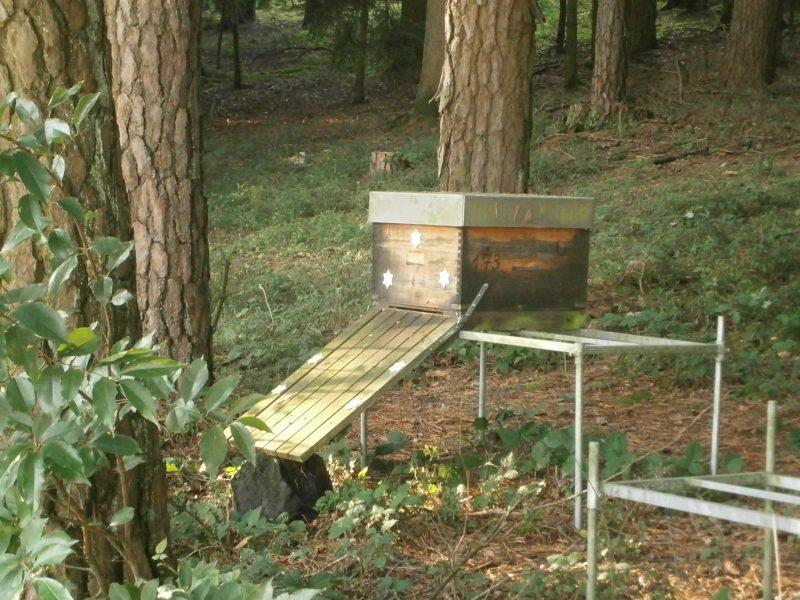 Bienen im Wald.