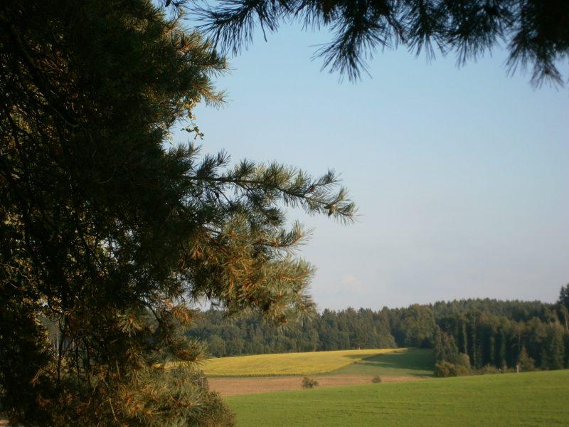 Slow Food: Der Honig ist ein Spiegelbild der mitteleuropäischen, voralpinen Landschaft des Isar-Hügellandes.