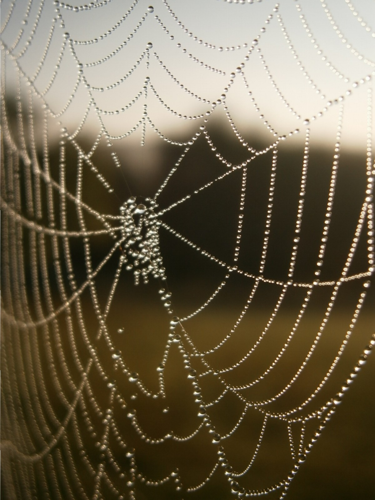 Herbstanfang: Tautropfen im Morgensonnenlicht an einem Spinnennetz.